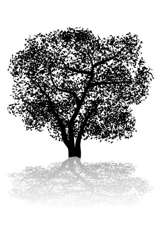 forrest: Abstract vector silhouette illustration of a tree and its shadow