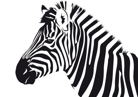 Abstract vector illustration of a zebra Illustration
