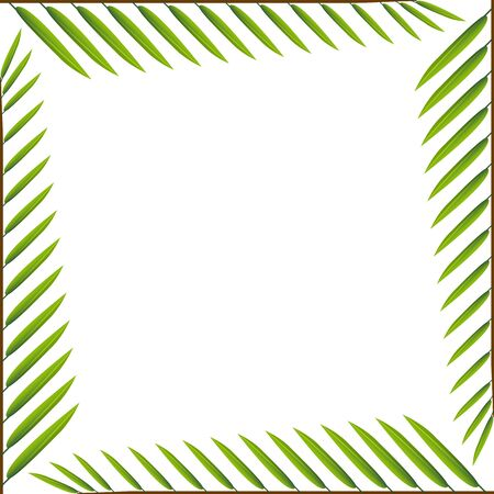 Template frame isolated palm leaves on white backdrop