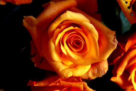 bouquet of red roses, yellow and orange