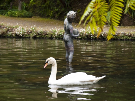 view of the white swan in a botanical garden photo