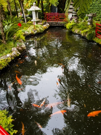 birds scenery: views of tropical gardens in Monte Palace, Funchal, Madeira
