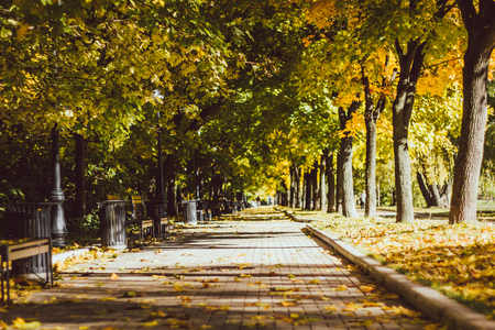 Yellow green alley Beautiful autumn landscape. Indian summer.