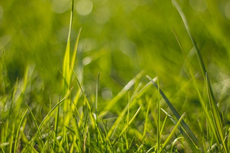 Juicy and bright green grass.Close up. Green grass background. The texture of the grass. Fresh herb. bright Imagens