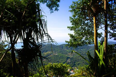 Tropical greenery in Thailand. Beautiful exotic landscape overlooking the green jungle and foliage of trees. Stok Fotoğraf
