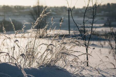 Zimowy krajobraz. Trawa pokryta mrozem i zaspy śniegu z bliska. Piękny widok na zimową przyrodę.