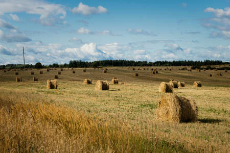 Nature background. Bales of hay in an agricultural field. Wheat field after harvest in Russia. Agricultural landscape. Stock fotó