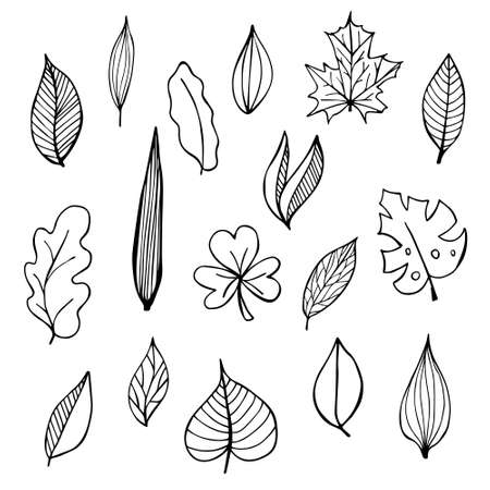 Collection of hand drawn botanical doodle set. Vector floral decorative hand drawn doodle set. Samples of vector leaves and branches.
