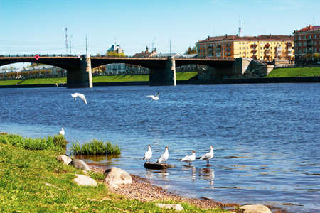 TVER, Russia, May 2021: View of the Novovolzhsky Bridge on the Volga River from the Afanasy Nikitin Embankment in Tver. Seagulls on the bank of the Volga river on the background of the bridge. 免版税图像