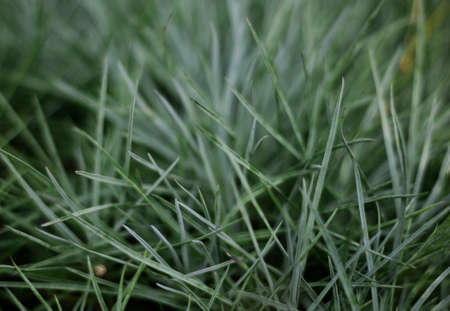 Grass background. Green grass close-up. Juicy grass in the forest. Copy space. Texture of green grass on the field