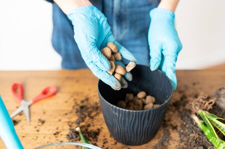 Hands of a gardener in protective gloves pour expanded clay stones for drainage