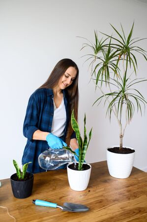 A young woman is gardening at home. The girl plants indoor plants in pots, she water plants from a jug with water Stockfoto