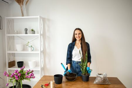 Spring gardening at home. A young woman replants decorative plants in pots. Home gardening nature and environment hobbies
