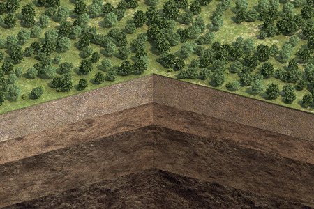 cutaway of soil with soil layers and forest. 3d rendering Stock Photo
