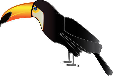 pounce: Vector illustration of toucan