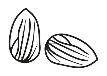 Vector line or outline icon of almond nut. Black and white icon of two nuts isolated on a white background. 일러스트