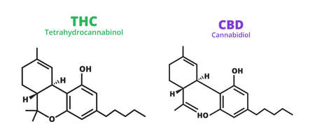 Vector set of chemical formula of cannabidiol and tetrahydrocannabinol - CBD molecule with anti-anxiety and anti-psychotic effects and THC psychoactive drug molecule isolated on white. Cannabis Sativa