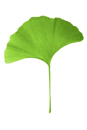 ginko biloba photo