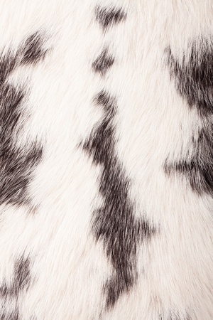 Detail of rabbit fur  photo