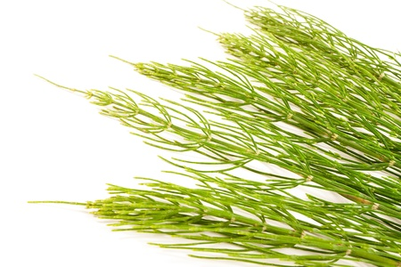 Field Horsetail on White Background Stock Photo