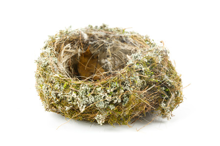 Real empty bird nest on white  photo