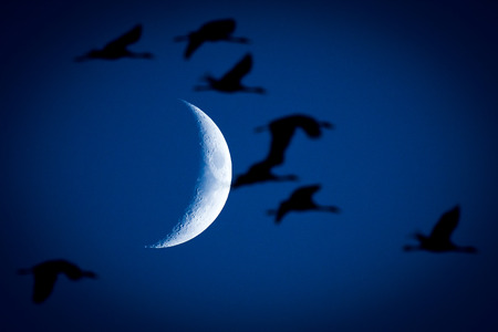 Silhouette Birds were flying on Moon Background.