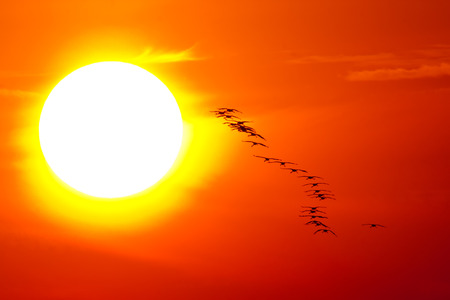 Crane flying into the sun in the national park Hortobgy