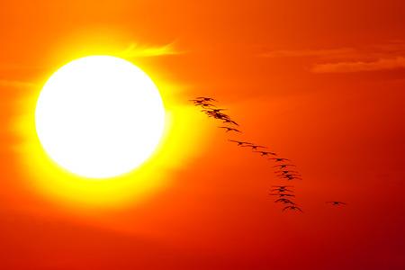 국립 공원 Hortobgy에서 태양으로 비행하는 크레인