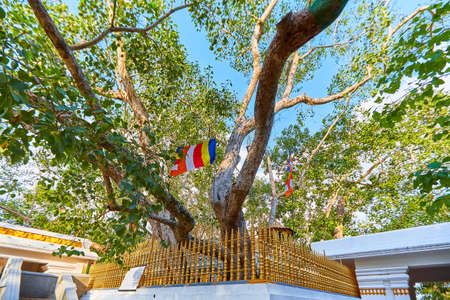 Jaya Sri Maha Bodhi is a sacred fig tree in the Mahamewna Gardens, Anuradhapura. A sacred place for Buddhists on Sri Lanka Reklamní fotografie