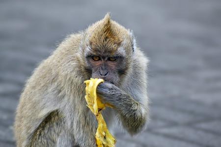 snapshot of nice monkey eat banana on Mauritius Stock Photo