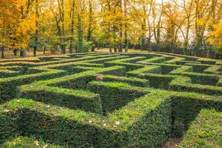 Ornamental garden with hedges of buxus sempervirens as a labyrinth. Maze garden ner Loucen castle in Czech republic. Colorful trees in background, autumn scene.