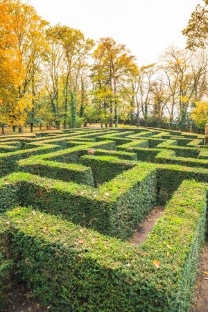 Ornamental garden with hedges of buxus sempervirens as a labyrinth. Maze garden ner Loucen castle in Czech republic.