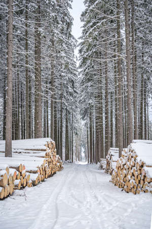 A pile of wood covered with snow. Winter coat, forest path and a pile of coniferous wood next to it. Season winter. Focus mainly on foreground. Standard-Bild