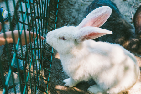 white and black rabbit in a cage