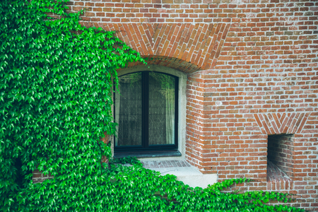 Old window surrounded by creeping ivy plants