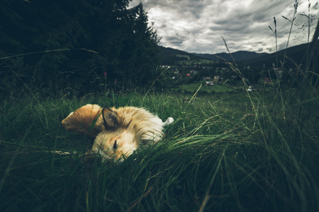 beautiful landscape of the mountians with dog Stock Photo