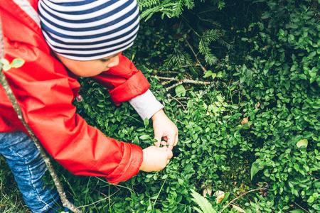 A little boy pulls Blueberries off a bush
