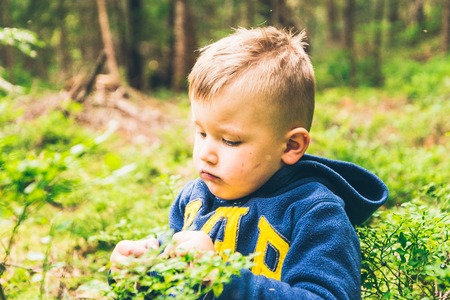 the furlough: Little kid eat blueberry in the forest Stock Photo