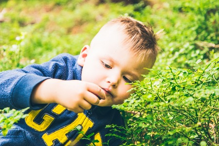 Little kid eat blueberry in the forest Stock Photo