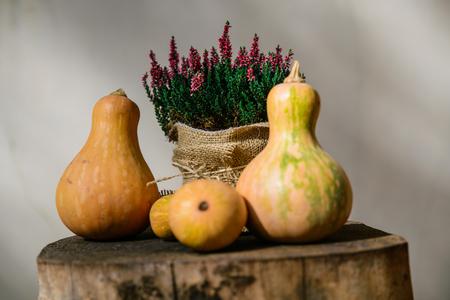 Autumn Pumpkins concept