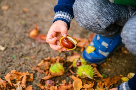 gioco del ragazzino con le castagne nel giorno di autunno