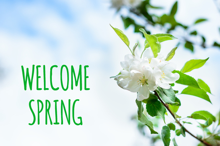 Welcome spring text with white pear flower close up