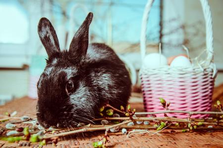 black fluffy bunny near basket with eggs Stock Photo