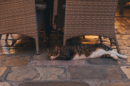 slipping cat at kotor streets in montenegro. Stock Photo