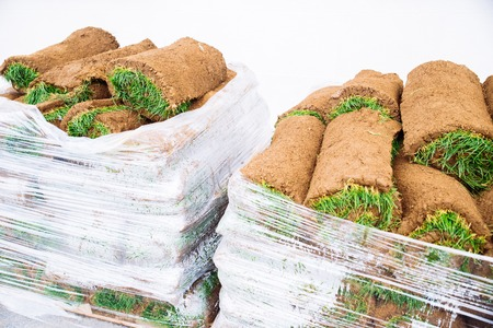 green grass rolls in palette. Stock Photo