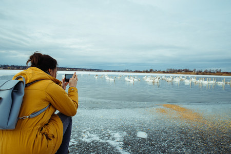 woman feed swans on frozen winter lake Stock Photo