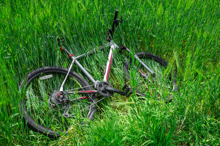 bicycle lay down in green barley field. nobody Stock Photo