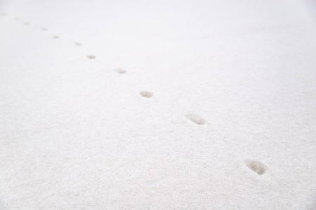 steps of the animal on white snow. winter season Stock Photo