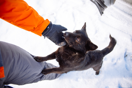 man pet the black cute dog at winter day Stock Photo