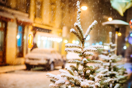 fir-tree covered by snow close up at city street at night. christmas time Standard-Bild